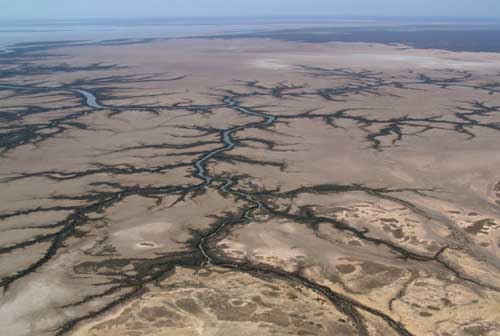 Flats of the Fitzroy River at Darby